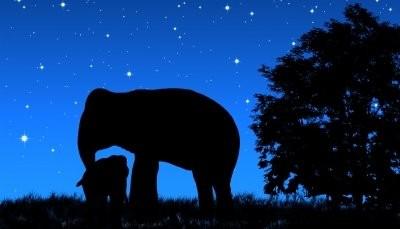 Silhueta elefante