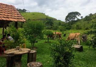 Vaca, campo, natureza